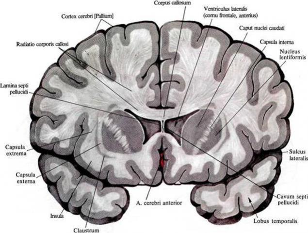 La Lógica De Pensamiento Parte 1 Neurona Página 1