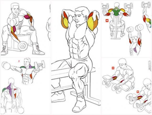Комплекс упражнений на спину с гантелями