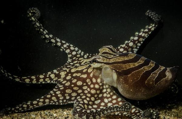 惊人的章鱼蜗牛巨型花生怎么v章鱼图片