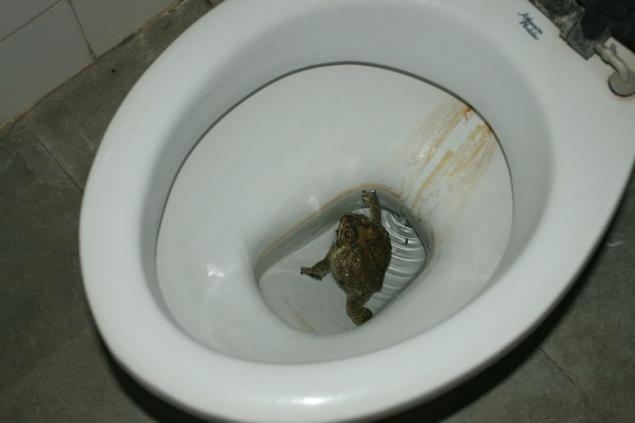 Неделю не могу сходить в туалет