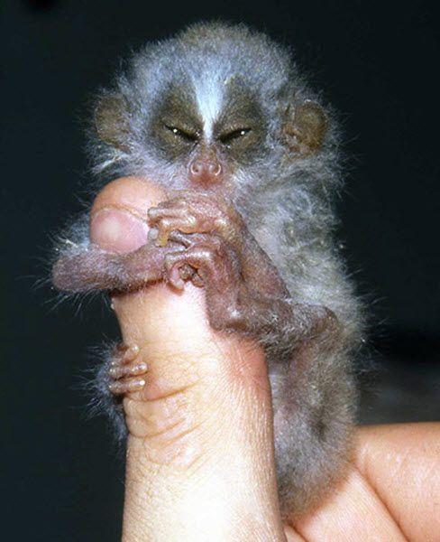 对濒临灭绝的最不寻常的动物