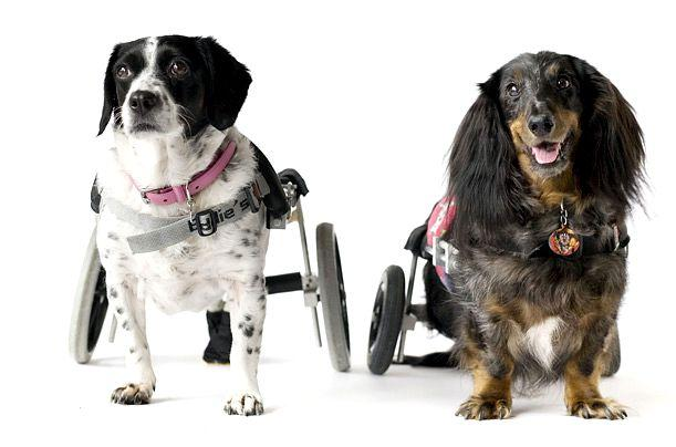 robotic pets and animals essay