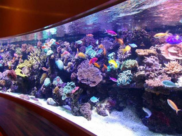 The most beautiful aquarium home to such page 1 Beautiful aquariums for home