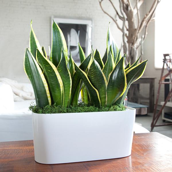 Breathe in new ways 7 powerful plants that are completely for Best air filtering houseplants