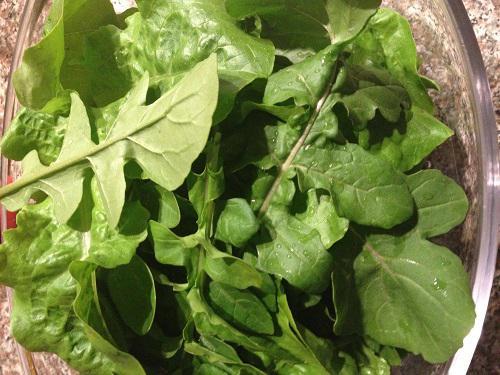 GardenAction  Your fruit herb and vegetable garden