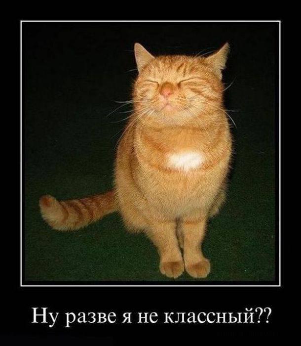 http://bashny.net/uploads/images/00/00/35/2013/05/09/93642427ad.jpg
