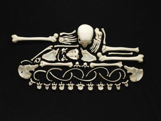 Art objects from real human bones (12 photos)  Page 1
