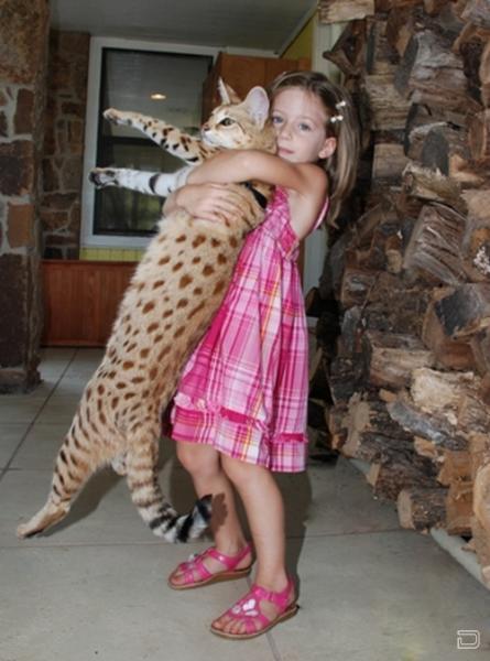 El Mejor Gato Del Mundo 12 Fotos Página 1
