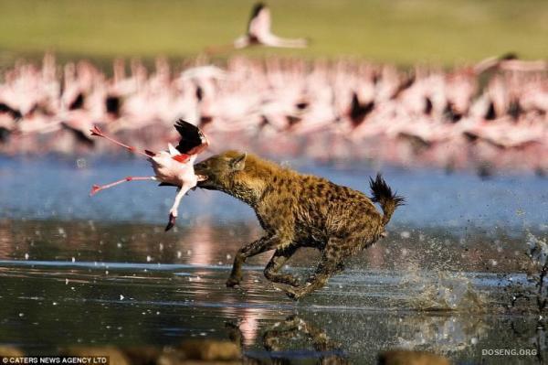 Q Comen Los Flamingos Aunque lo que esta ahi para