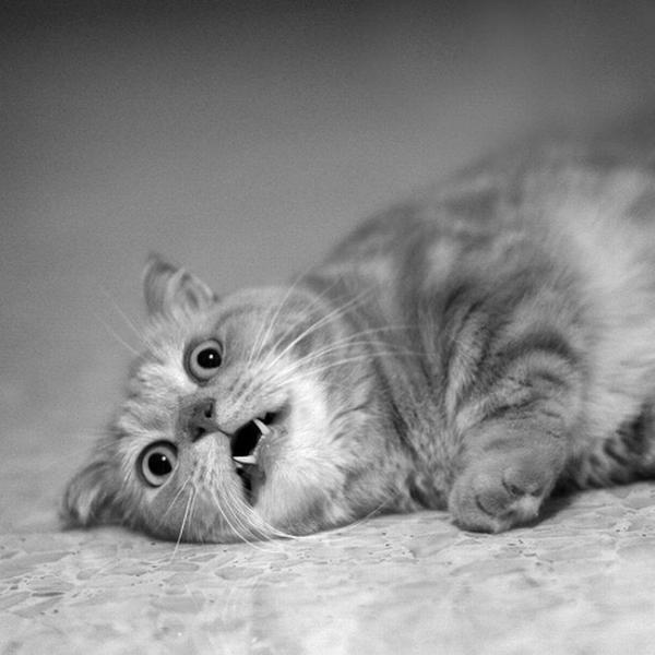 Жены смешные, прикольные картинки с надписями без кошек