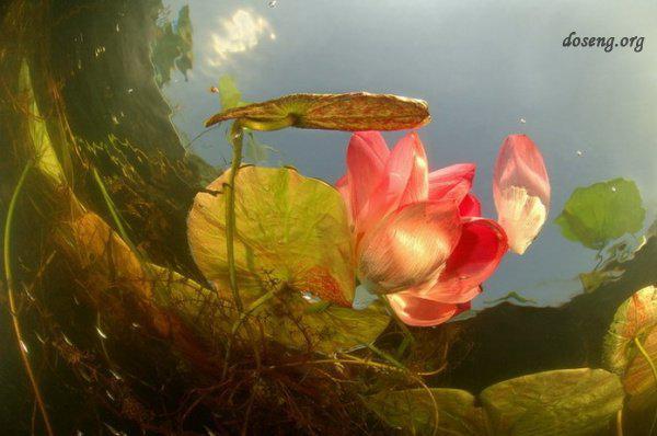 Цветы в подводном мире