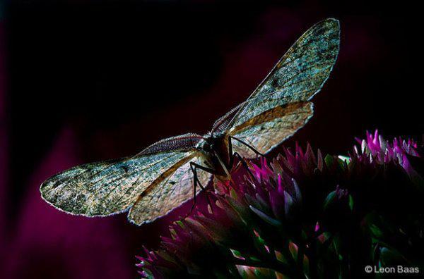 Cicada beautiful