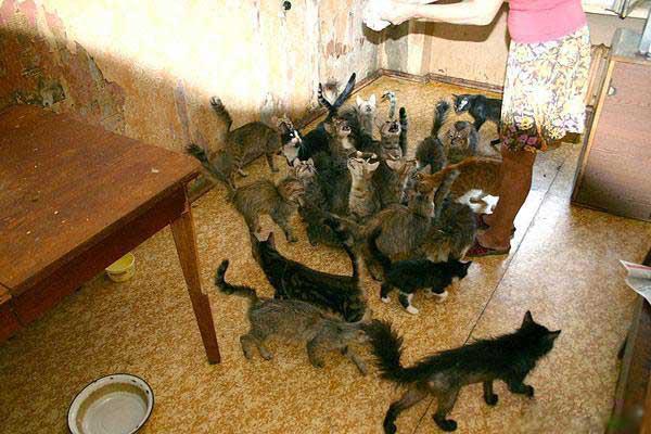 Как живут кошки в домашних условиях