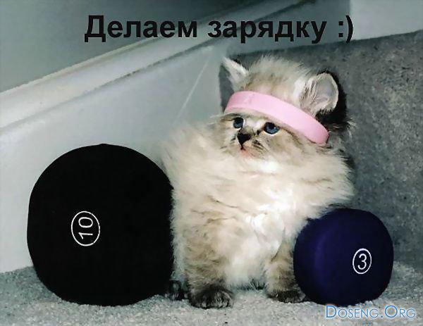 Workout kitten