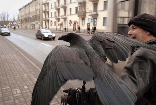 Resultado de imagen para Cuervo Como Mascota