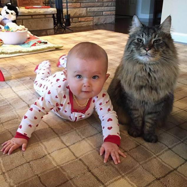 сковороду смешные до слез картинки с котами и младенцами особенности выращивания уход