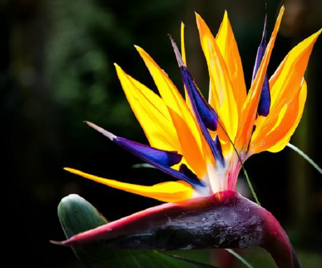 Paraiso Para El Alma De Los Esteta 10 Flores Mas Bellas Del Mundo