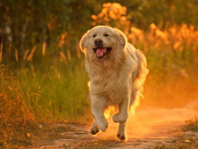 A Todos Nos Gusta Los Perros Pero De Estos 20 Hechos Muy