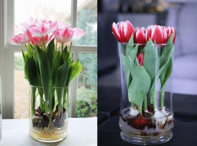 Как сажать луковичные цветы в горшок 17