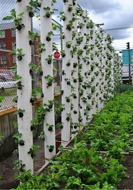 Идеи для выращивания клубники 58
