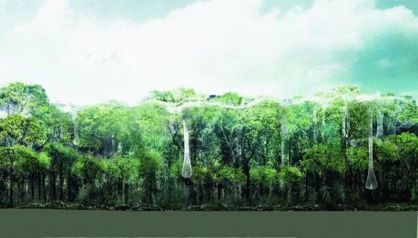 Rainforest canopy background