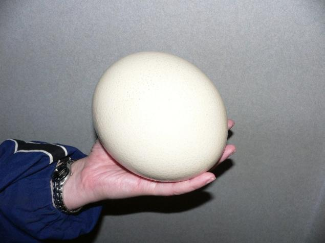 Ostrich egg. Page 1