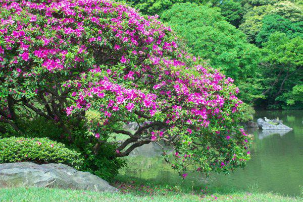 Lo m s hermoso jard n en tokio p gina 1 for Arboles jardin hoja perenne