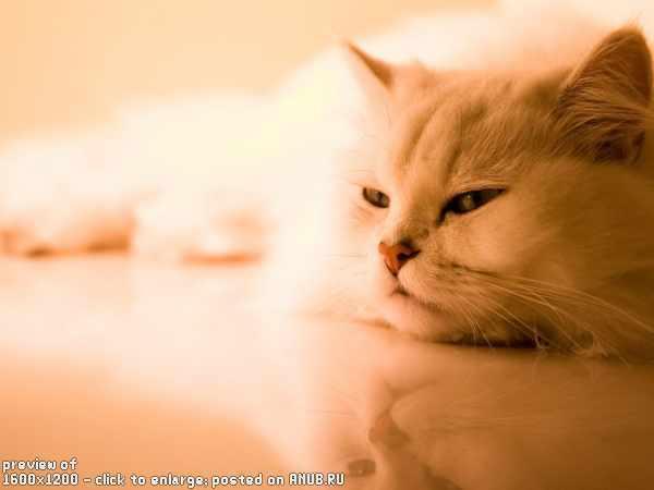 Котенок на плече  № 1126922 загрузить