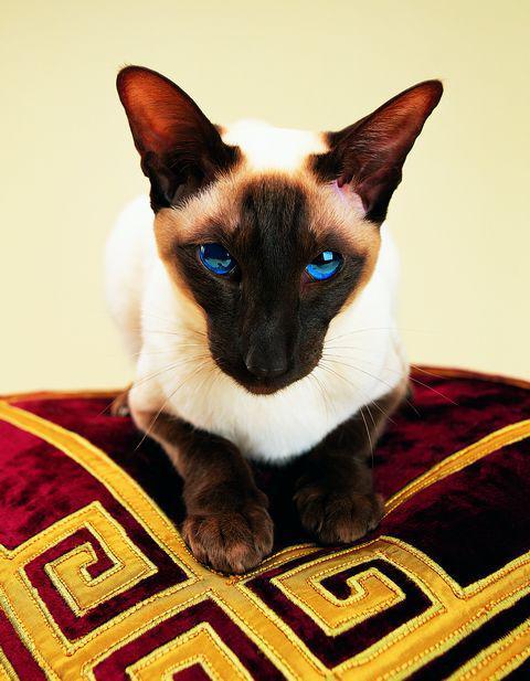 pet pride cat litter commercial
