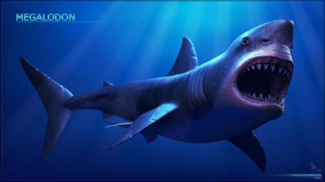 Megalodon - the master of ancient oceans (18 photos)  Page 1