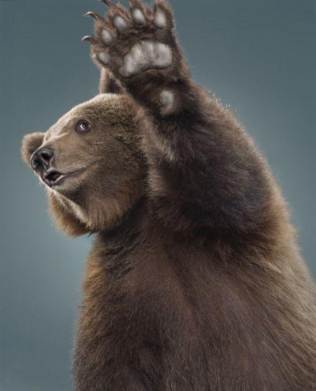 Продаже, смешные картинки медведей