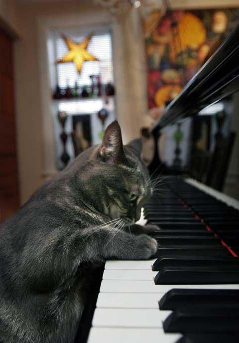 Смешные картинки про рояль, рождеством новым годом