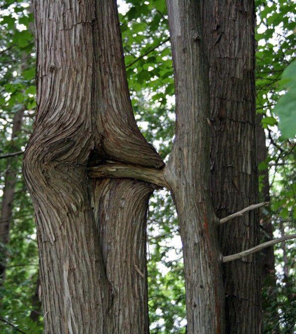 Прикольные картинки деревья, венчальные венцы картинка