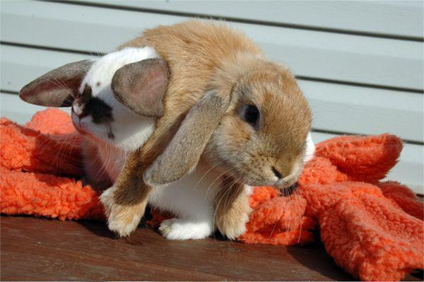 Февраля, прикольные картинки зайцев с надписями