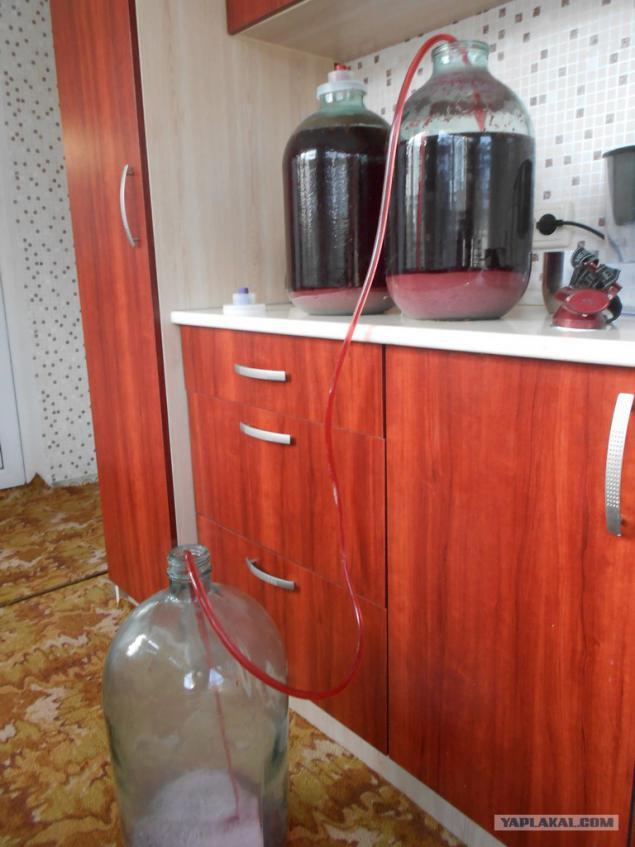 Виноградное вино в домашних условиях своими руками 15
