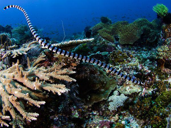 змеи в океане фото