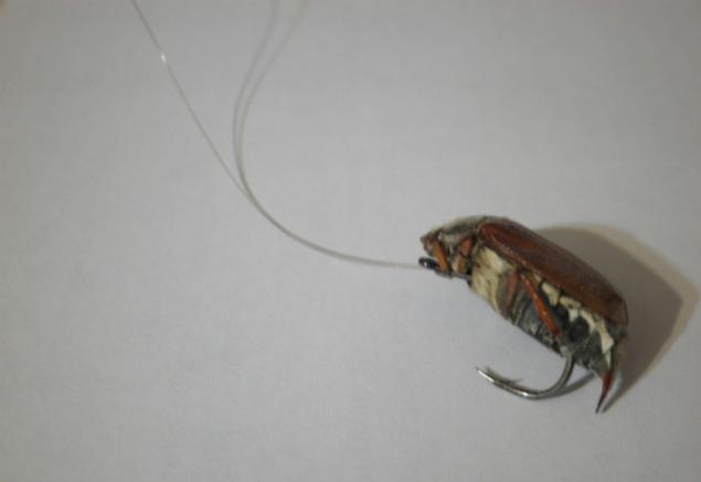 Как сделать майского жука для рыбалки