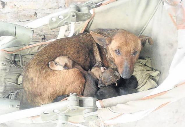 Картинки по запросу дворовая собака спасла брошенного младенца