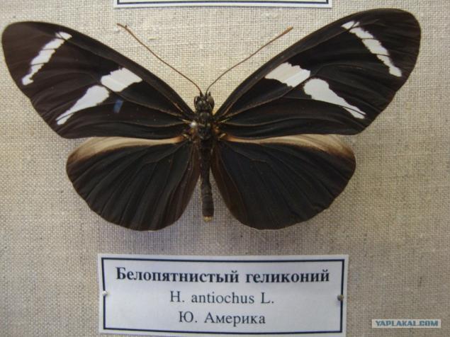Фото зоологический музей в санкт-петербурге официальный сайт