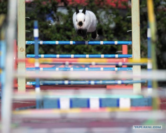 Пухленькая любит прыгать на члене 7 фотография