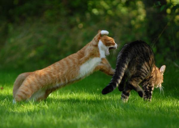 Cats fighting in house