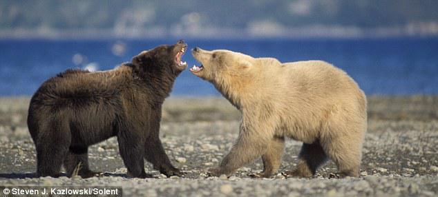 Resultat d'imatges de fauna alaska