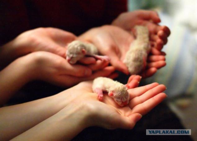 фото только рождённых котят #4
