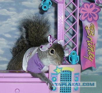 The Supermodel  Sugar Bush Squirrel  International Superstar