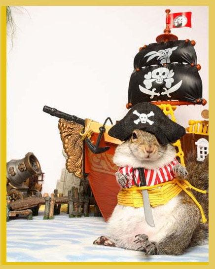 Funny pirate prayer Sugar Bush Squirrel  International