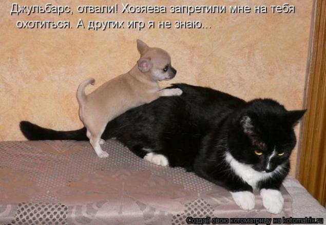 Картинки прикольные с надписями с кошками и собаками