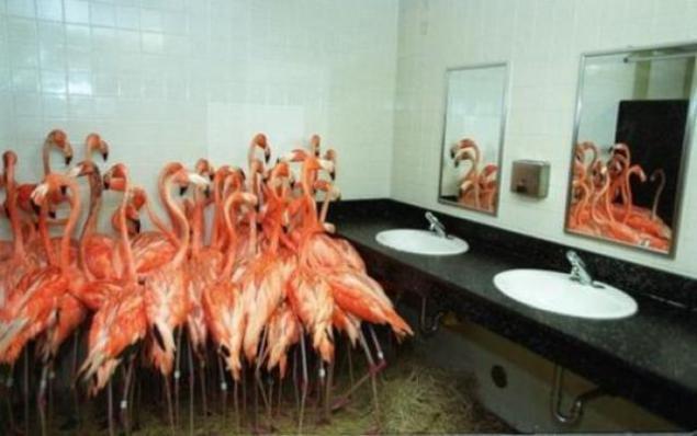 Funny bathroom stall