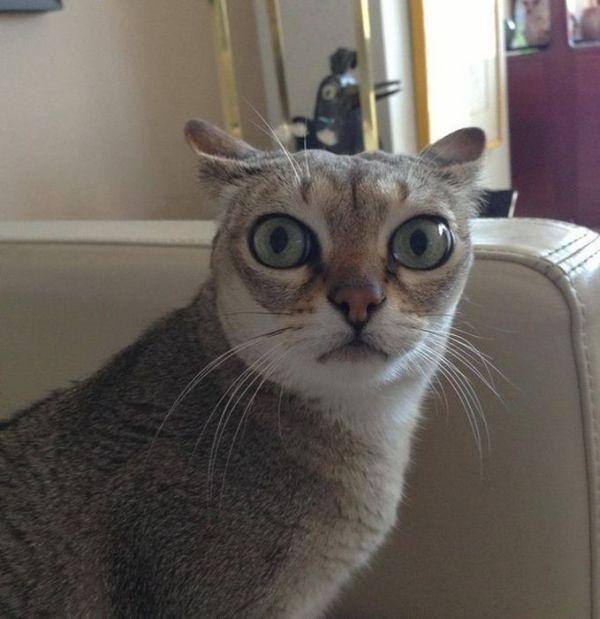 what does it mean when a cats eyes are dilated