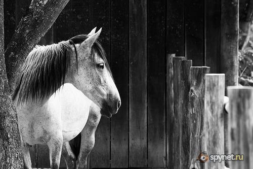 Horses talk with their EARS Creatures use subtle body