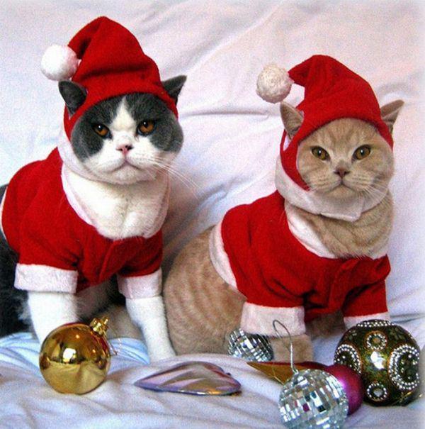 Новогодние костюмы кота своими руками 62